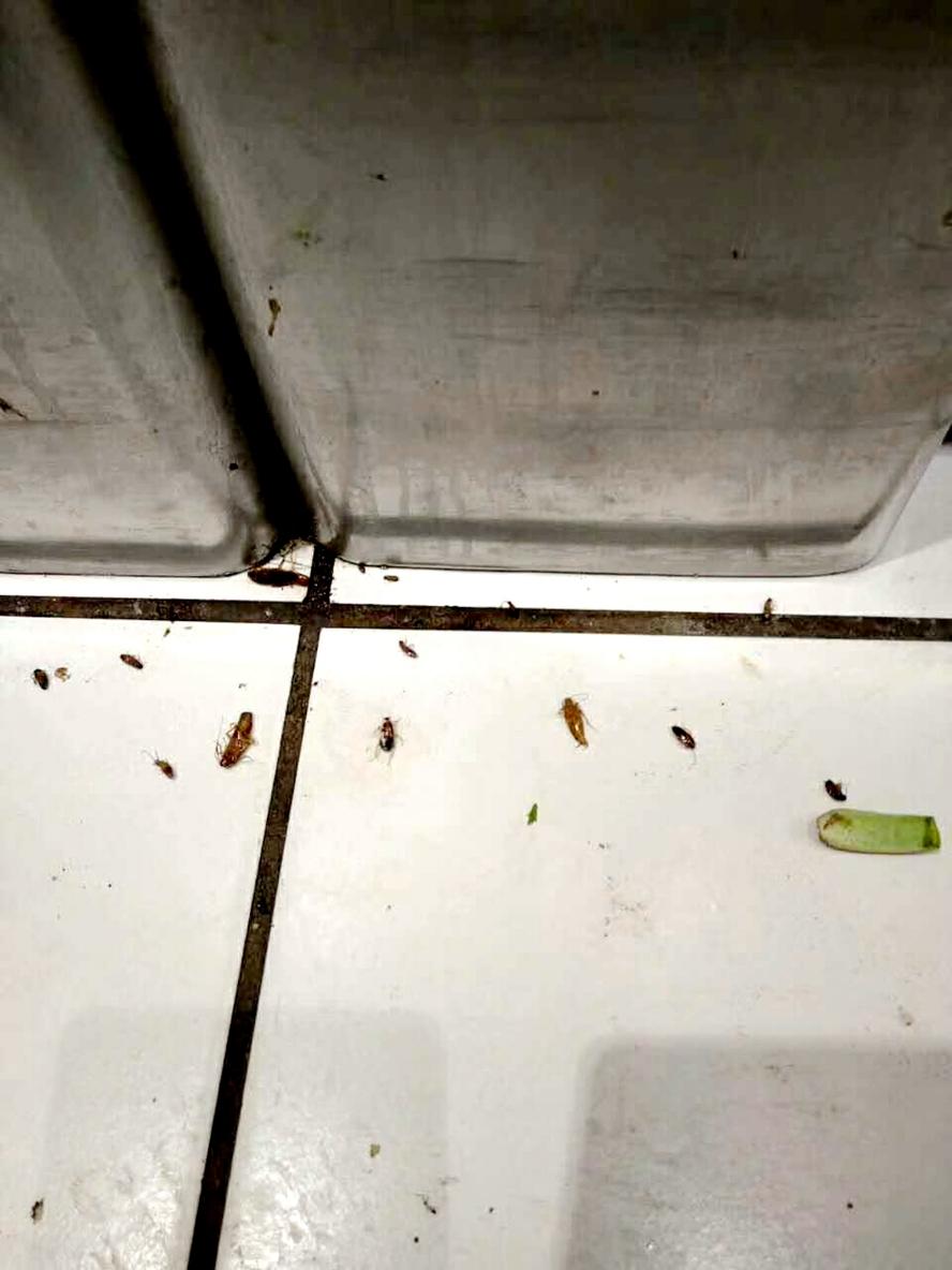 灭蟑螂师傅,蟑螂的习性,蟑螂侵害,粘蟑盒,防治蟑螂,蟑螂尸体,清波灭蟑螂公司